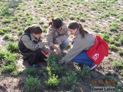 Calculando por grupo Materia seca en alfalfa