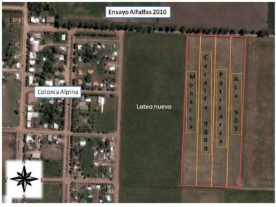 Ensayo de Alfalfa y Manejo de Efluentes 2010