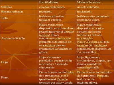 Diferencias entre Monocotiledóneas y Dicotiledóneas